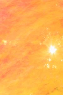 風に揺れる紅葉のモミジと木漏れ日の写真素材 [FYI01526133]