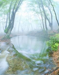 朝霧の湧水池・出つぼの写真素材 [FYI01526286]