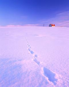 朝日ケ丘の小屋と足跡の写真素材 [FYI01526365]