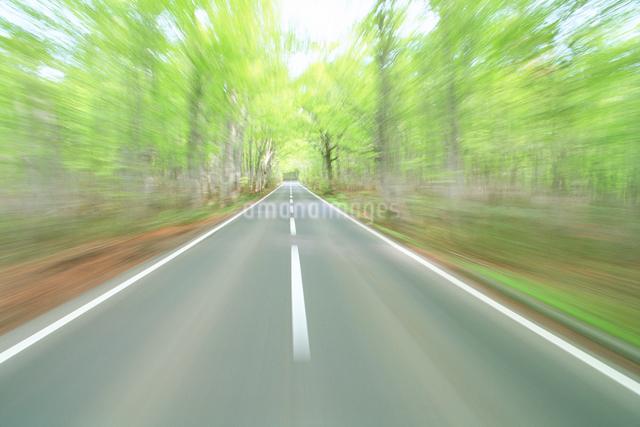 新緑のブナ林の走行イメージの写真素材 [FYI01526387]