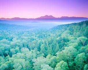 朝の樹氷(西クマネシリ岳)の写真素材 [FYI01526443]
