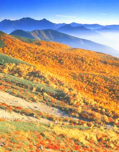 秋の樹林と槍 穂高連峰の写真素材 [FYI01526563]