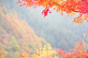モミジ もみじ湖の写真素材 [FYI01526731]