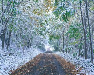 新雪の林道と樹林の写真素材 [FYI01527248]