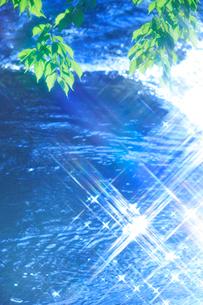 サクラの若葉と清流の写真素材 [FYI01527271]