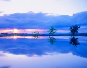 木立と水田と朝日 峠の写真素材 [FYI01527332]