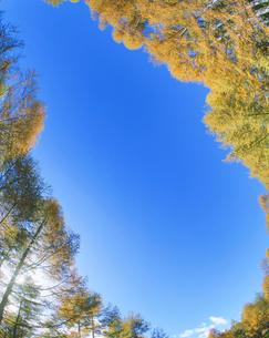 カラマツ林と木もれ日 乗鞍岳の写真素材 [FYI01527415]