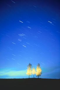 白樺木立と星空の写真素材 [FYI01527589]