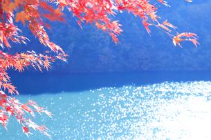 紅葉のモミジと輝く水面の写真素材 [FYI01527867]