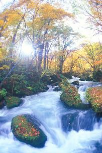 紅葉樹林と阿修羅の流れと木漏れ日の写真素材 [FYI01528509]