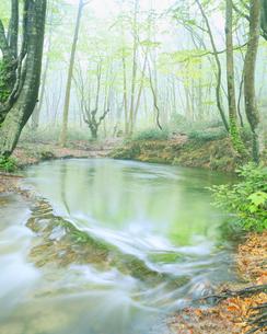 朝霧の湧水池の写真素材 [FYI01528717]