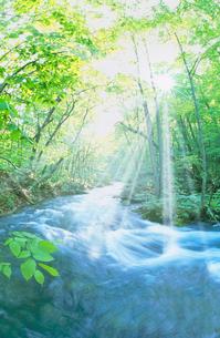 清流と木漏れ日と光芒 奥入瀬の写真素材 [FYI01528969]
