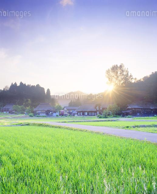 茅葺環状集落の夕景の写真素材 [FYI01529050]