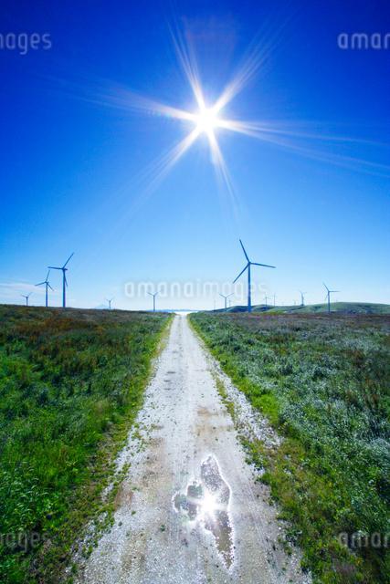 風力発電の風車と道の写真素材 [FYI01529140]