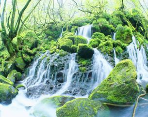 岩清水 苔の元滝の写真素材 [FYI01529662]