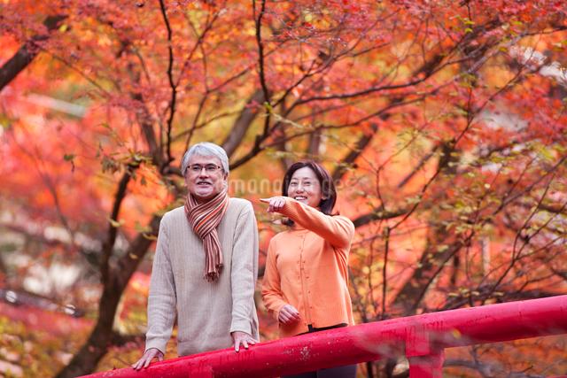 紅葉狩りをする中高年夫婦の写真素材 [FYI01530366]
