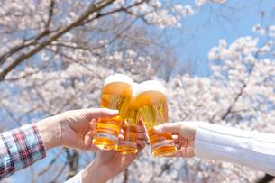 桜と生ビールで乾杯する三人の手の写真素材 [FYI01530579]