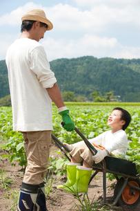 畑の中で父が押す一輪車に乗る男の子の写真素材 [FYI01530705]