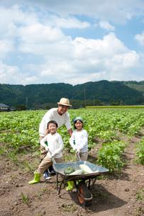 作物を乗せた1輪車を押す子供男女と父の写真素材 [FYI01530774]