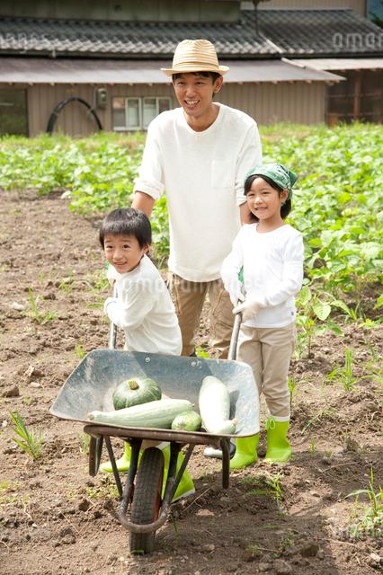 畑の中で野菜を積んだ一輪車を押す子供男女と父の写真素材 [FYI01530817]