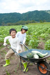 作物を乗せた1輪車を押す子供男女の写真素材 [FYI01530863]