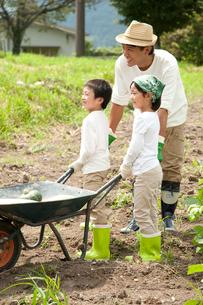 畑の中で野菜を積んだ一輪車を押す子供男女と父の写真素材 [FYI01530874]