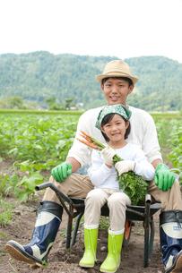 畑の中で父と一輪車に乗る女の子の写真素材 [FYI01530966]