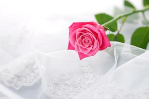 レースとピンクのバラの写真素材 [FYI01530984]