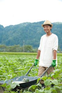 畑の中で一輪車を押す男性の写真素材 [FYI01531017]