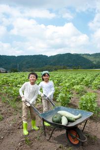 作物を乗せた1輪車を押す子供男女の写真素材 [FYI01531159]