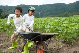 畑の中で野菜を積んだ一輪車を押す子供男女の写真素材 [FYI01531211]