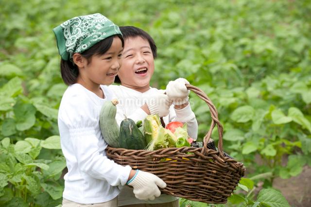 畑の中で収穫した野菜を持つ子供男女の写真素材 [FYI01531222]