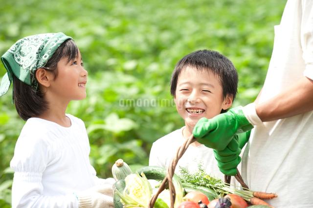 畑の中で収穫した野菜を持つ父と子供男女の写真素材 [FYI01531595]