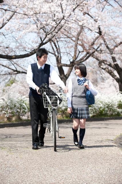 桜と自転車の高校生男女の写真素材 [FYI01531620]