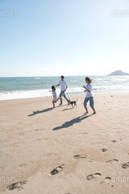 海辺で犬と散歩する家族の写真素材 [FYI01531962]
