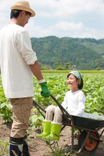 畑の中で父が押す一輪車に乗る女の子の写真素材 [FYI01532359]