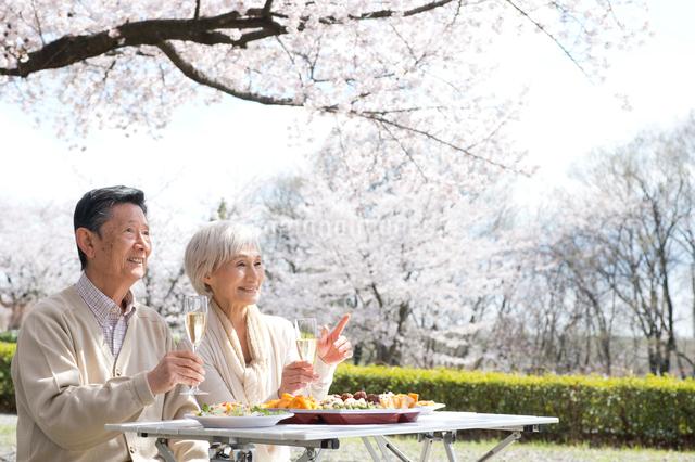 花見でシャンパンを飲む老夫婦の写真素材 [FYI01532600]