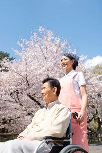 花見をする車椅子の老人と介護ヘルパーの写真素材 [FYI01532877]