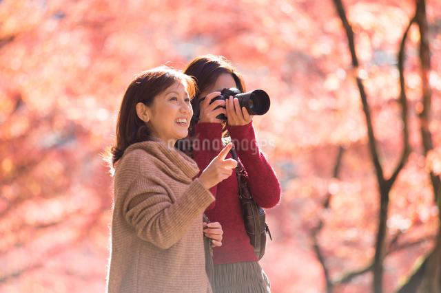 紅葉をカメラで撮影する母と娘の写真素材 [FYI01533829]