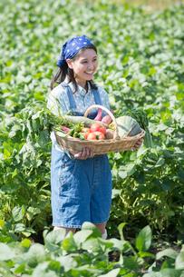 畑で収穫した野菜を見せる女性の写真素材 [FYI01533999]