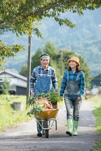 収穫した野菜を一輪車で運ぶ中高年夫婦の写真素材 [FYI01534794]