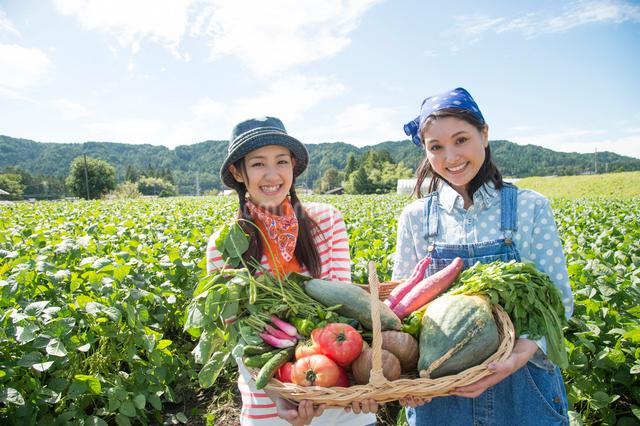 畑で収穫した野菜を見せる女性二人の写真素材 [FYI01535117]