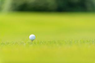 ゴルフ場の芝とゴルフボールの写真素材 [FYI01536496]