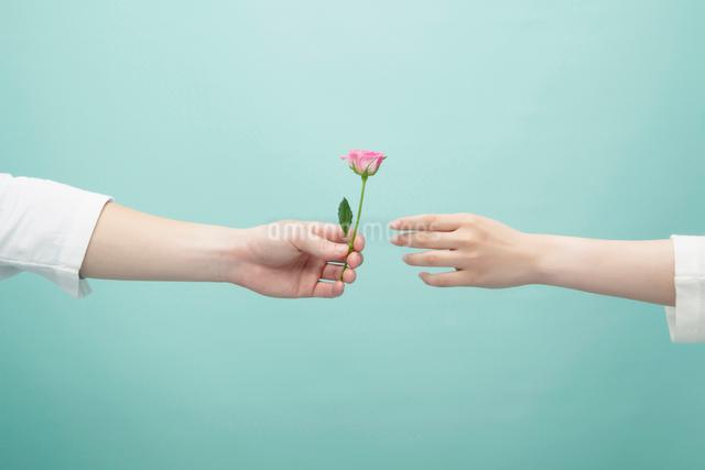 バラを差し出す手の写真素材 [FYI01536857]