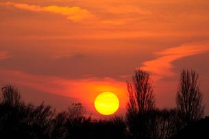 水元公園 中央広場のポプラ並木と夕日の写真素材 [FYI01539888]
