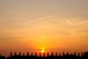 水元公園 中央広場のポプラ並木と夕日の写真素材 [FYI01539891]