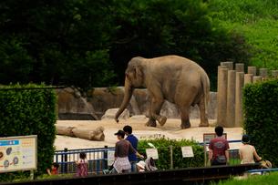千葉動物公園の写真素材 [FYI01540862]