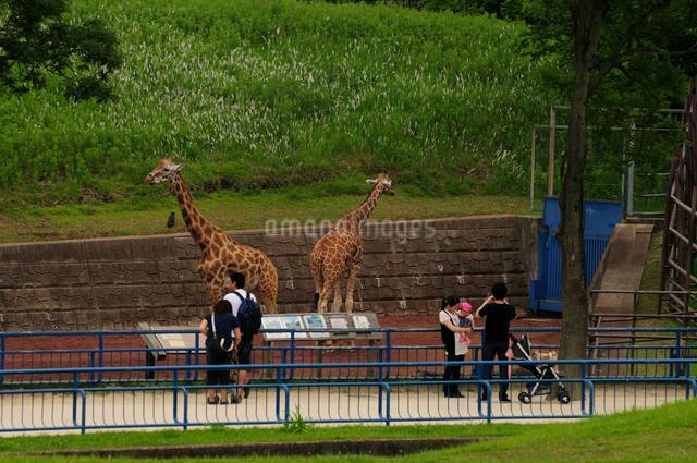 千葉動物公園の写真素材 [FYI01541791]