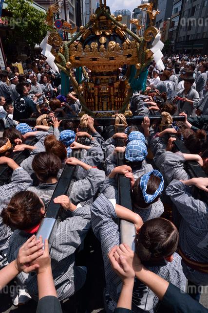 三社祭りの御神輿,女性の担ぎ手の写真素材 [FYI01541968]
