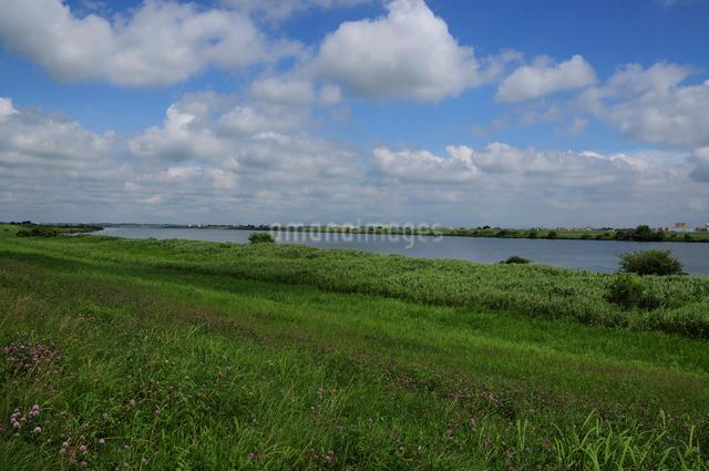利根川の写真素材 [FYI01541984]